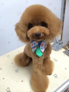 Dog Salonりぼん トリミング