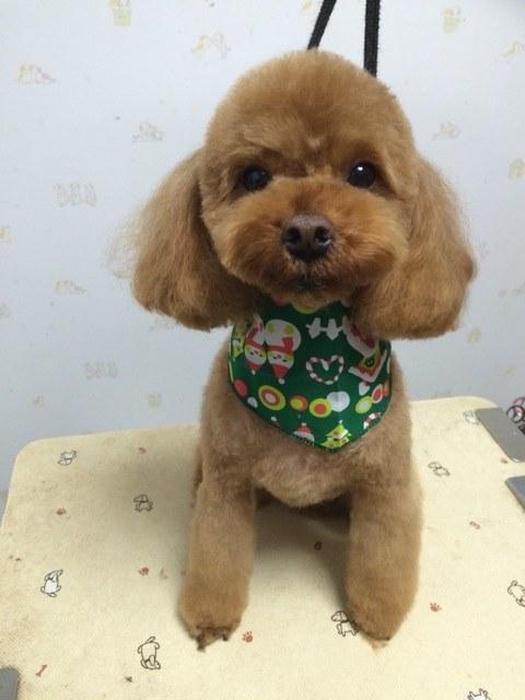 2:Dog Salonりぼん トイプードル トリミング