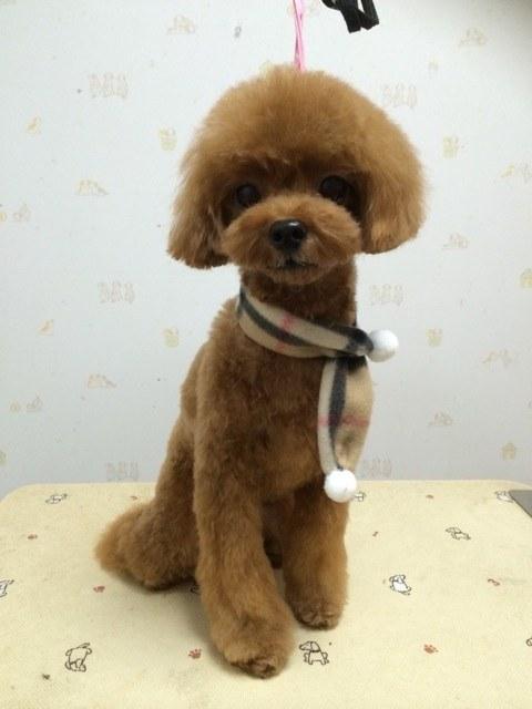 1:Dog Salonりぼん トイプードル トリミング